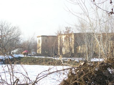 Schaf allein in Qala-e-kona