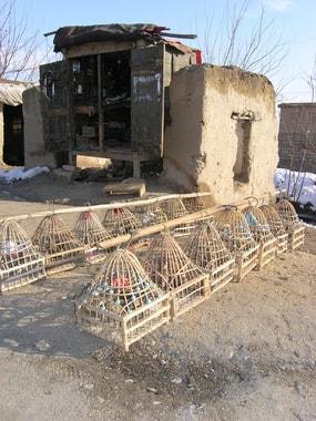 Wachteln werden an der Straße zum Verkauf angeboten